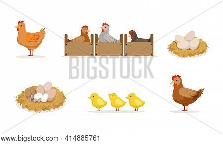 Poultry Breeding, Hen Hatching Eggs In Nest Cartoon Vector Illustration