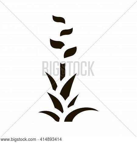 Exotic Flower Glyph Icon Vector. Exotic Flower Sign. Isolated Symbol Illustration