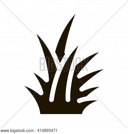 Tropical Bush Glyph Icon Vector. Tropical Bush Sign. Isolated Symbol Illustration