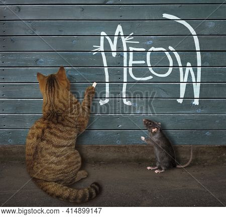 A Beige Cat Wrote Meow In Chalk On The Wooden Fence.
