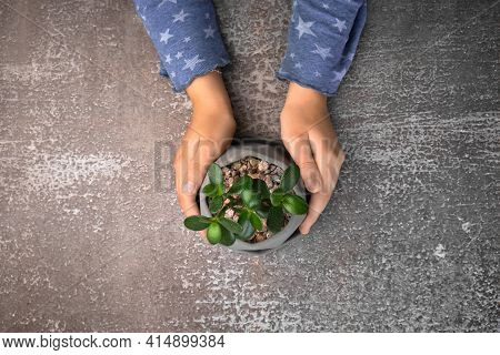 Child Holding Tin Can With Beautiful Succulent At Grey Table, Top View