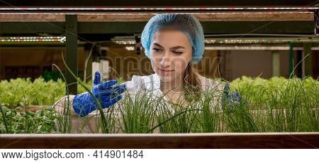 Woman Gardeners Keep Greenery At Hydroponic Farm And Observing Growth Greenery Meticulously Before D