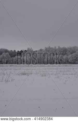 Winter Landscape With Snowy Field And Forest On The Horizon. Quiet Cloudy Day.