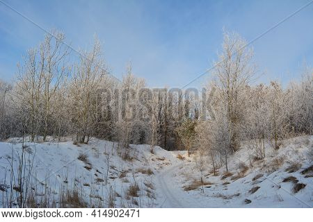Path To The Forest In Winter. The Trees Are Covered With Hoarfrost.