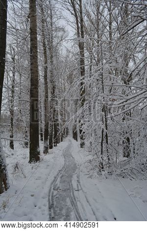 Snowy Path With Fresh Traces Going Through Alley With Trees Covered By Snow