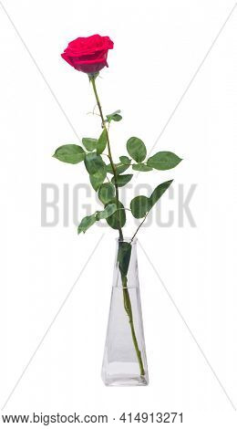One long red rose in a transparent vase isolated over white background