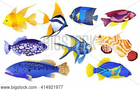 Tropical sea and aquarium fishes collection on white background. Set of freshwater and saldwater aquarium cartoon fishes. Varieties of ornamental popular color fish