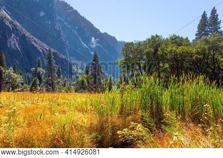 Yosemite Valley. Autumn yellowed grass in the meadows of the valley. Yosemite Park is located on the slopes of the Sierra Nevada.
