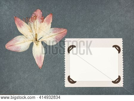 Page From An Old Photo Album. Flowers Llily. Scrapbooking Element Decorated With Leaves, Flowers And