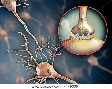 Two neurons connecting by using electrochemical transmissions. Digital illustration.