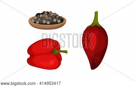 Red Bell Pepper As Ripe Vegetable And Organic Food With Peppercorn Vector Set