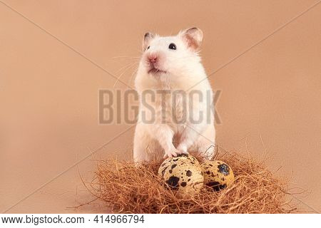 One Funny Hamster With Quail Eggs. One Rodent Stands At The Nest Of Eggs On A Beige Background