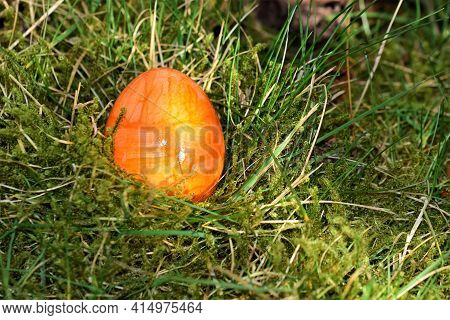 Orange Colored Easteregg In The Mossy Grass