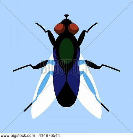 Fly With Wings, Top View. Vector Fly In The Original Flat Style.  Blue Background. Vector Design Ele