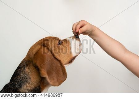 The Dog Eats From A Hand, White Background