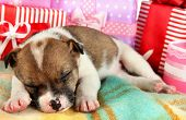 Beautiful little puppy sleeping surrounded by gifts poster