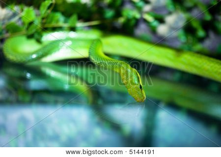 green snake with a reflection o9n blue poster
