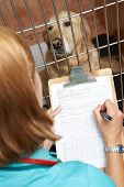 Veterinary Nurse Checking On Dog In Cage poster