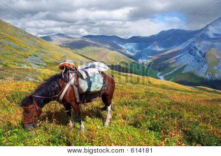 Horse And Mountains.