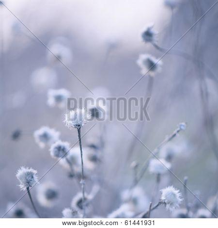 Blue Toned Wildflowers