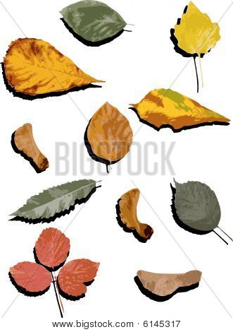 Autumn leaves with silhouette vectors