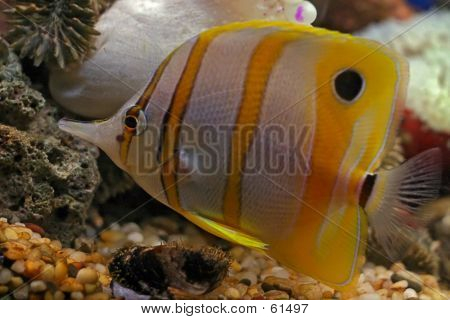 Tropical Fish...