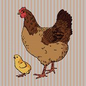 Vector illustration of realistic broody chicken and baby chick, isolated poster