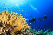 Scuba diving underwater over ocean coral reef poster