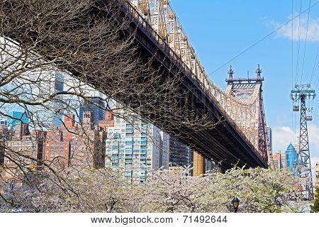 Queensboro Bridge and Roosevelt Island tramway in cherry blossom.