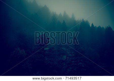 Dark Foggy Forest Hills