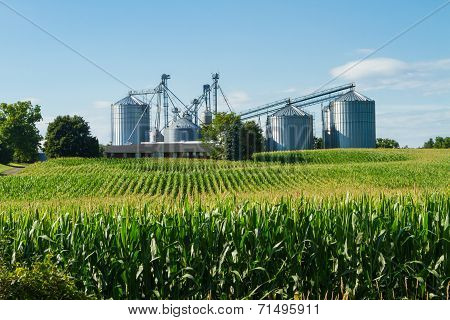 Silos behind a cornfield and farm