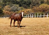 Portrait Picture of Large Strong Brown Colt Horse in HD poster