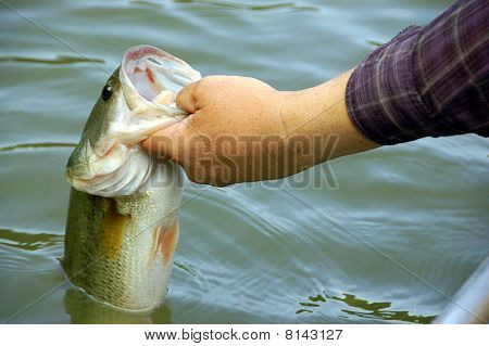 fisherman holding a large mouth bass closeup poster