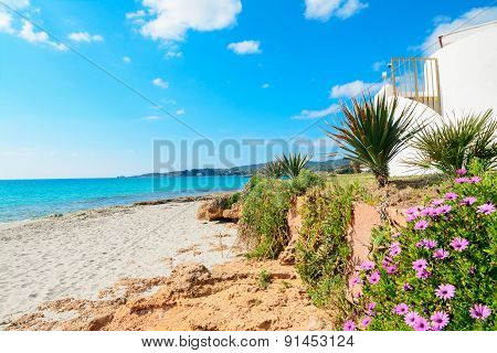 Flowers By The Shore In Le Bombarde Beach