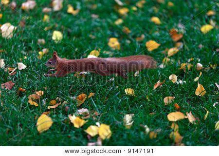 A Little Squirrel Jump
