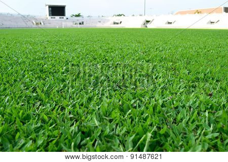 fresh spring green grass in football field