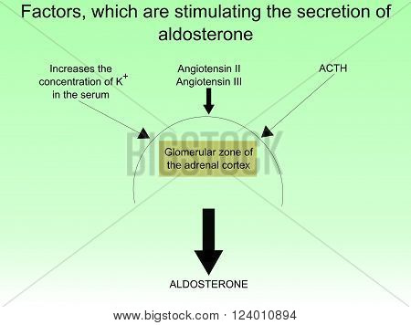 Factors, which are stimulating the secretion of aldosterone