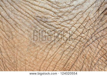 Close up of rough wrinkled elephant skin