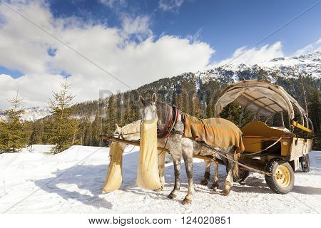 Two Horses Eating Oats From Jute Bag After Carriage Ride.