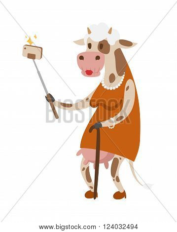 Selfie cow like old woman vector portrait illustration. Selfie cow white background. Cartoon cow old woman, animal cow vector. Selfie shot cow woman human body. Vector cow animal isolated.Cow vector old woman