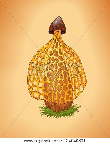 Rare yellow mushroom illustration. Dictyophora indusiata.Tropical Stinkhorn mushroom Phallus indusiatus. Cartoon fungus. poster