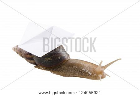 Snail carrying an envelope, isolated on white, with empty space for your text (snail mail concept)