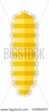 Animal insect centipede and wildlife nature bug centipede. Centipede venomous poisonous predator with many legs and danger outdoors centipede. Centipede millipede cartoon posing flat insect vector.