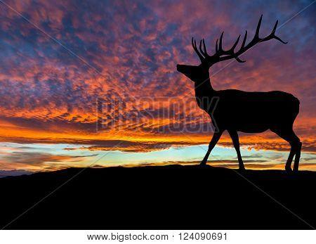 Silhouette Of Red Deer Elk At Sunset