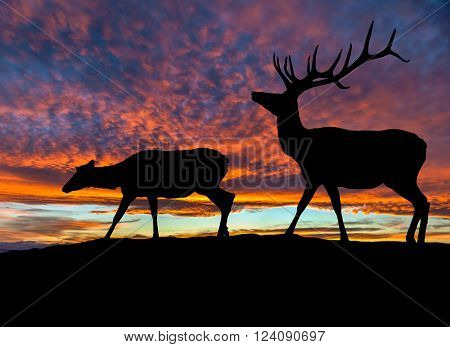 Silhouette Of Two Red Deer Elk At Sunset