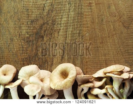 Oyster Mushrooms on a wooden background with copy space for text. ** Note: Soft Focus at 100%, best at smaller sizes