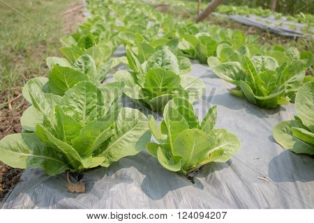Organic vegetable growing in farm stock photo