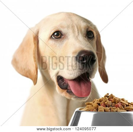Hungry dog with bowl of tasty food, isolated on white