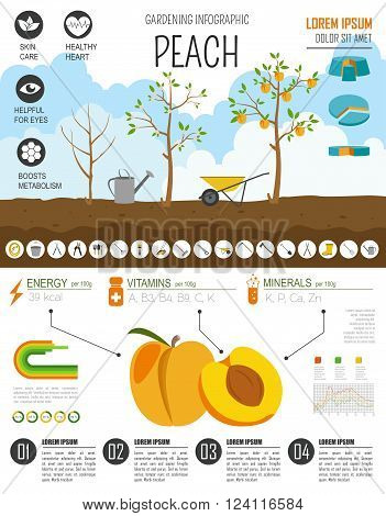 Gardening work, farming infographic. Peach. Graphic template. Flat style design. Vector illustration
