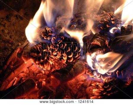 Fir cones burning